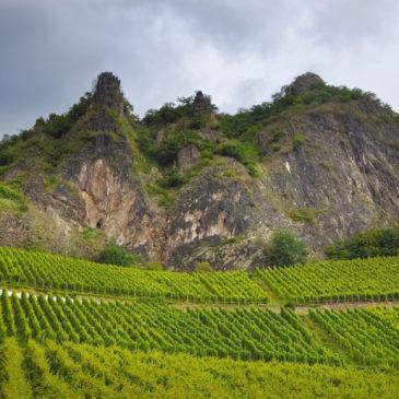 Les 40 ans des AOP Côtes du Roussillon et Côtes du Roussillon Villages
