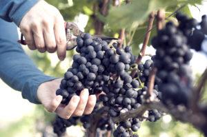mains coupent raisins