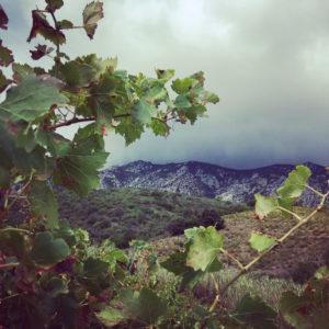 vue le manoir des schistes domaine viticole